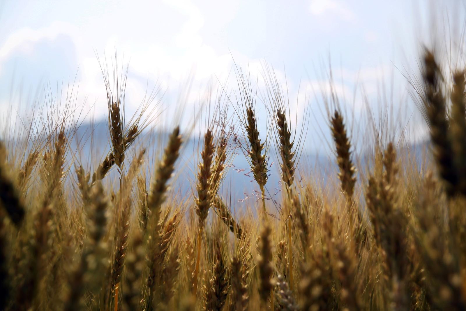 Digital total: Schöne neue Landwirtschaft