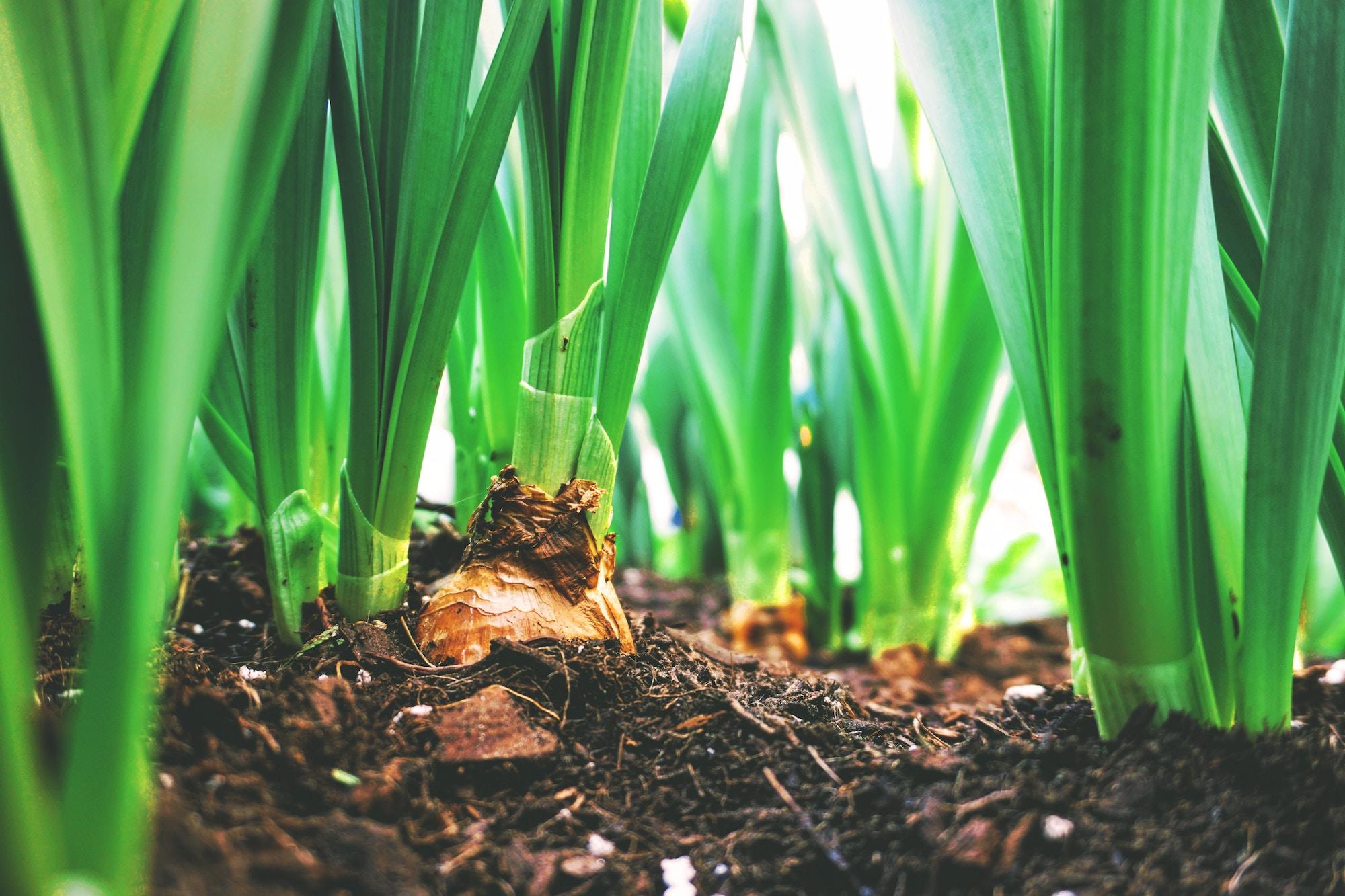 Ökolandbau ist der Goldstandard